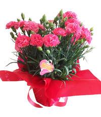 明日より2日間(13日・14日)母の日『花GIFT』販売!