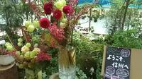 【信州へようこそ!】今週の信州花