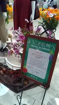 9月14日はコスモスの日! ~2Fファッションディスプレイ~