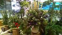 本日9月9日、重陽の節句・信州花展示