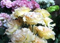 リシアンサス 長野県の誇るお花です>