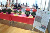 【りんごのひろば】第50回 長野県鉢花類コンクール上位入賞作品シクラメン展示