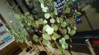 【ようこそ令和】新元号制定記念 希望の木を作ろう!