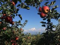 りんごのひろば イイヅナのリンゴ ~林檎のある風景~ 飯綱町