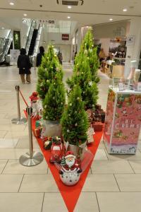 MIDORIにクリスマスがやってきました!