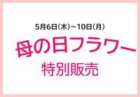 【期間限定】母の日フラワー特別販売!